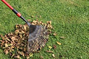 Chariots de jardin pour le ramassage de feuilles mortes